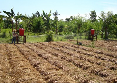 NW Bali Organic Farming & Agroforestry Project