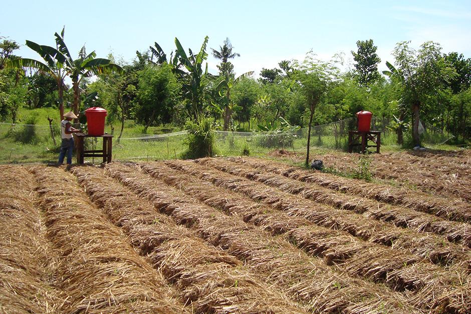 Organic-farming-940
