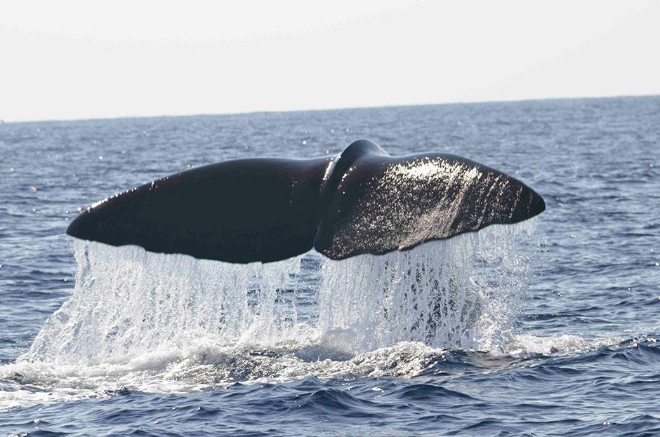 Whales-Mir-4-940
