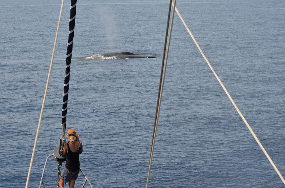 Whales-Mir-940