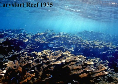 Decline of Caribbean Coral Reefs: 1972-2013