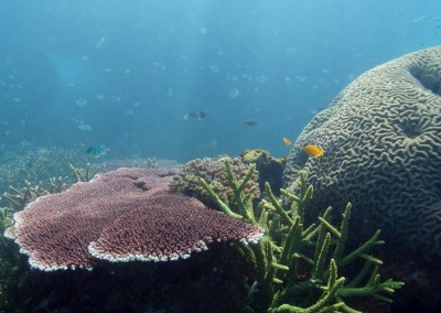 NW Bali Coral Reef Conservation