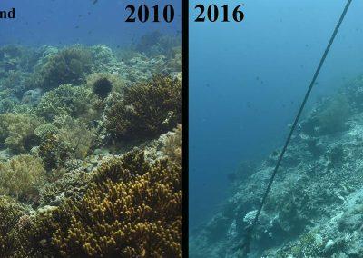 NW Bali Coral Bleaching 2016